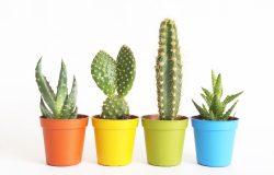 Shutterstock 685465333